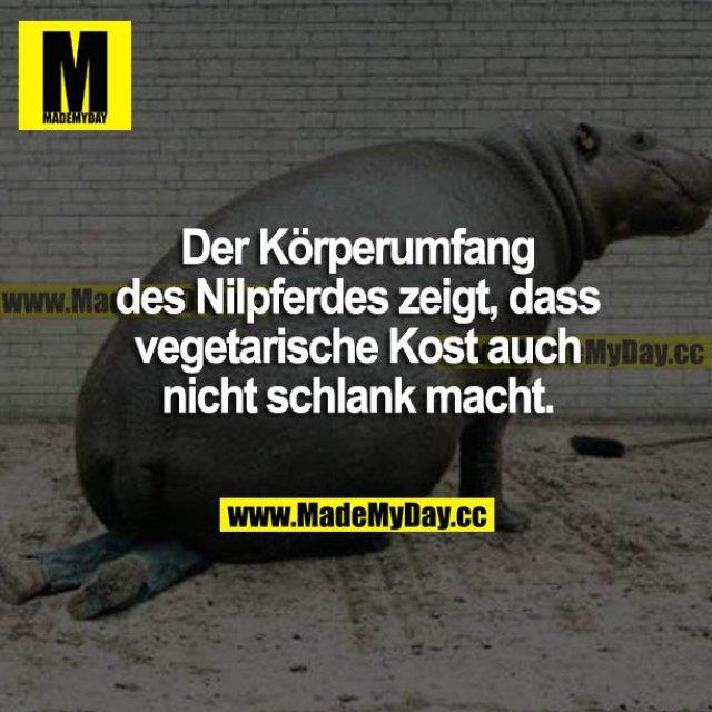 Der Körperumfang des Nilpferdes zeigt, dass vegetarische Kost auch nicht schlank macht.