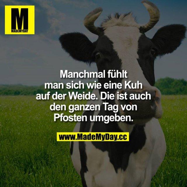 Manchmal fühlt man sich wie eine Kuh auf<br /> der Wiese.<br /> Die ist auch den ganzen Tag von Pfosten umgeben.