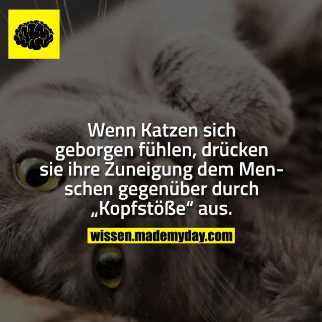 """Wenn Katzen sich geborgen fühlen, drücken sie ihre Zuneigung dem Menschen gegenüber durch """"Kopfstöße"""" aus."""