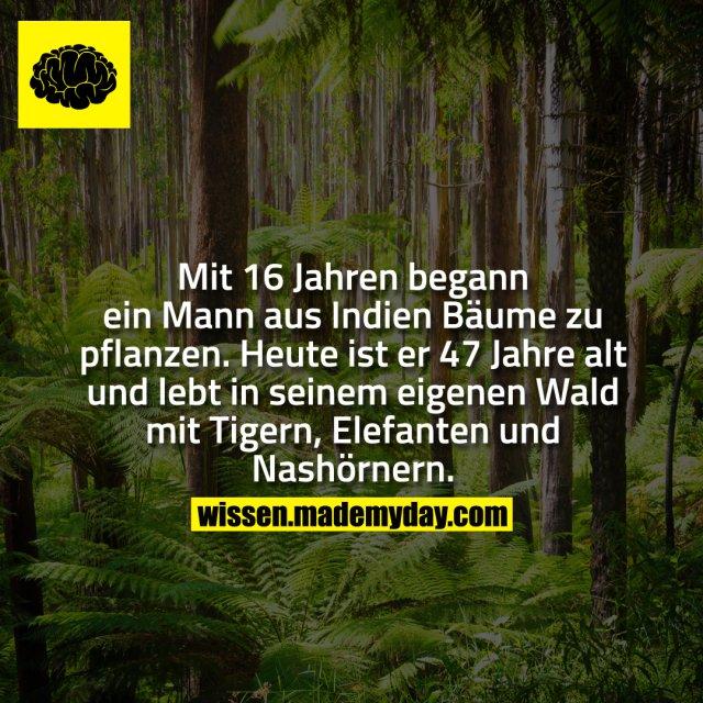 Mit 16 Jahren begann ein Mann aus Indien Bäume zu pflanzen. Heute ist er 47 Jahre alt und lebt in seinem eigenen Wald mit Tigern, Elefanten und Nashörnern.