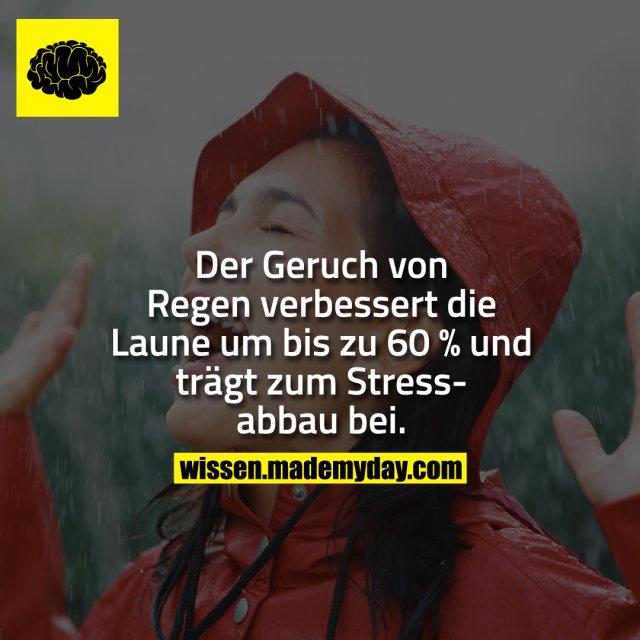 Der Geruch von Regen verbessert die Laune um bis zu 60 % und trägt zum Stressabbau bei.