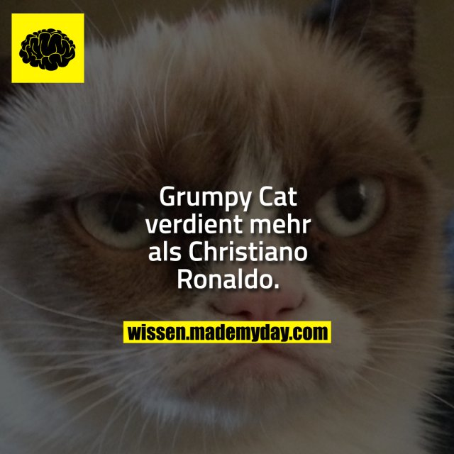Grumpy Cat verdient mehr als Christiano Ronaldo.