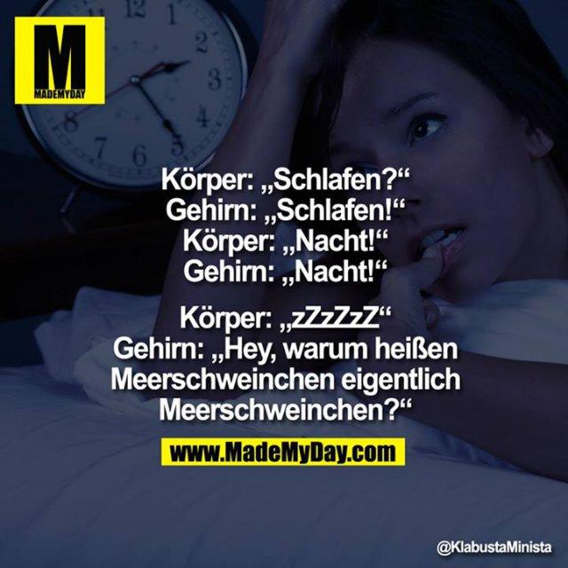 """Körper: """"Schlafen?""""<br /> Gehirn:""""Schlafen!""""<br /> Körper: """"Nacht!""""<br /> Gehirn:""""Nacht!""""<br /> <br /> Körper: """"zZzZzZ""""<br /> Gehirn:""""Hey, warum heißen Meerschweinchen eigentlich <br /> Meerschweinchen?"""""""