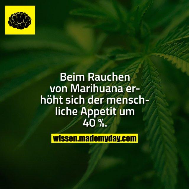 Beim Rauchen von Marihuana erhöht sich der menschliche Appetit um 40 %.