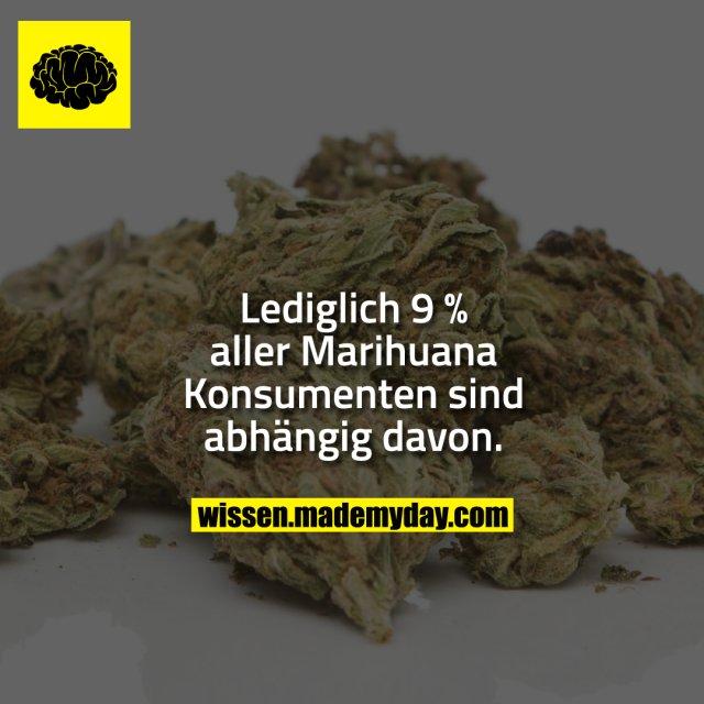 Lediglich 9 % aller Marihuana Konsumenten sind abhängig davon.