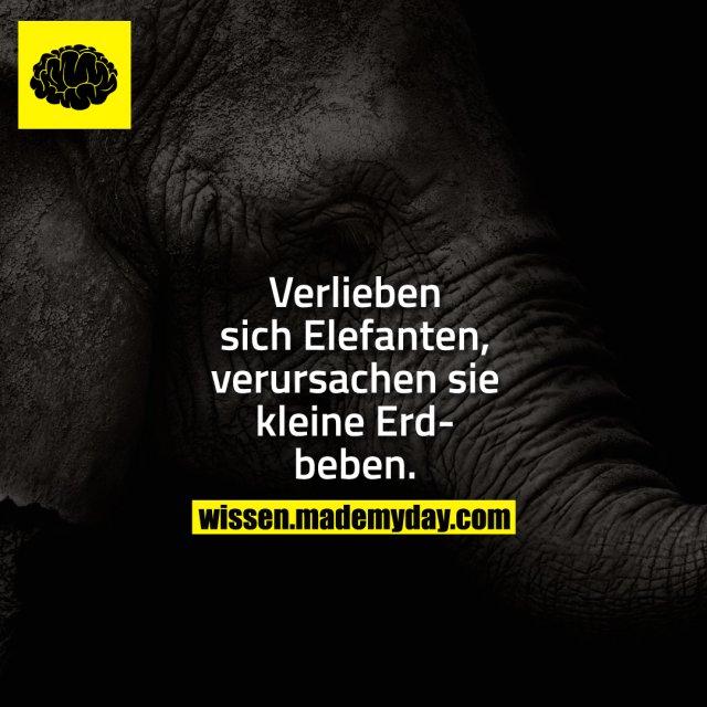 Verlieben sich Elefanten, verursachen sie kleine Erdbeben.