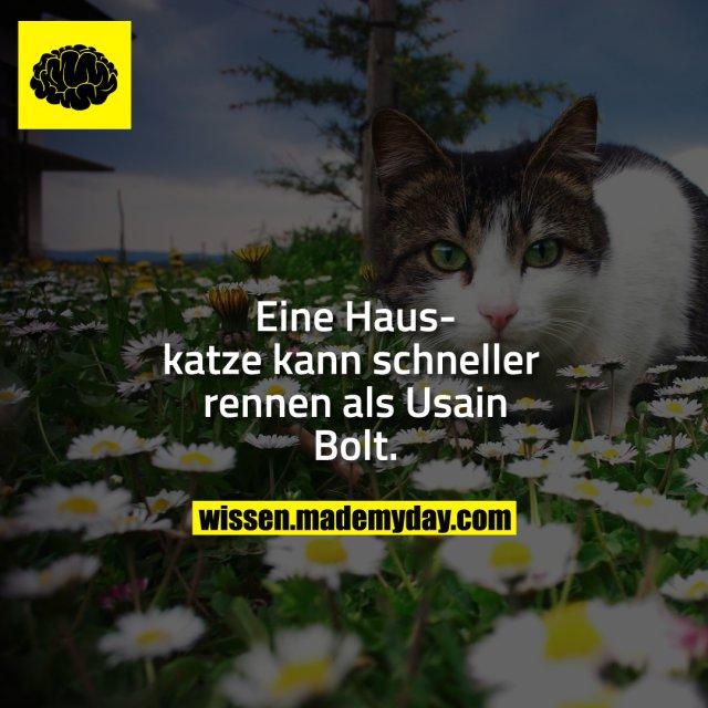 Eine Hauskatze kann schneller rennen als Usain Bolt.