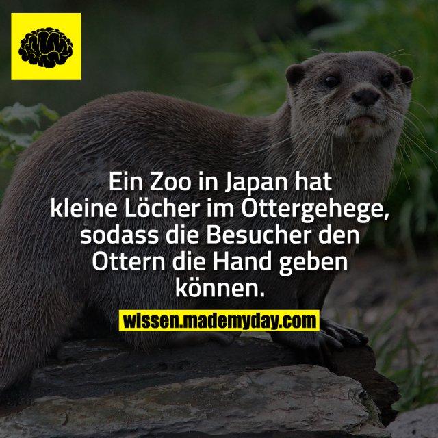 Ein Zoo in Japan hat kleine Löcher im Ottergehege, sodass die Besucher den Ottern die Hand geben können.
