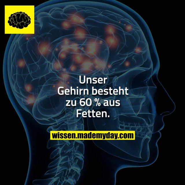 Unser Gehirn besteht zu 60 % aus Fetten.