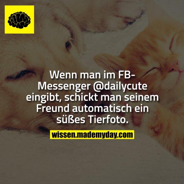 Wenn man im FB-Messenger @dailycute eingibt, schickt man seinem Freund automatisch ein süßes Tierfoto.