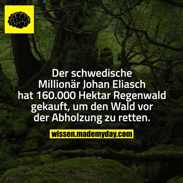 Der schwedische Millionär Johan Eliasch hat 160.000 Hektar Regenwald gekauft, um den Wald vor der Abholzung zu retten.
