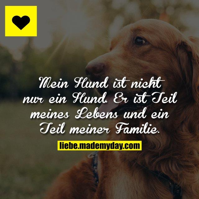 Mein Hund ist nicht nur ein Hund. Er ist Teil meines Lebens und ein Teil meiner Familie.