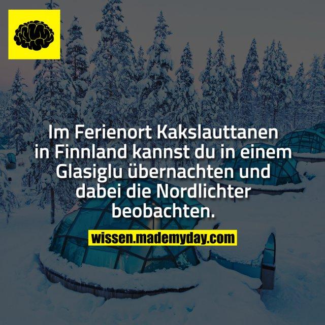 Im Ferienort Kakslauttanen in Finnland kannst du in einem Glasiglu übernachten und dabei die Nordlichter beobachten.