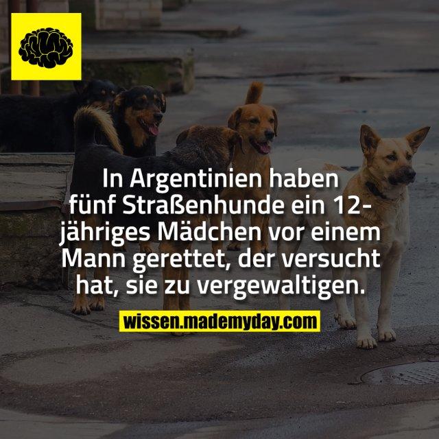 In Argentinien haben fünf Straßenhunde ein 12-jähriges Mädchen vor einem Mann gerettet, der versucht hat, sie zu vergewaltigen.