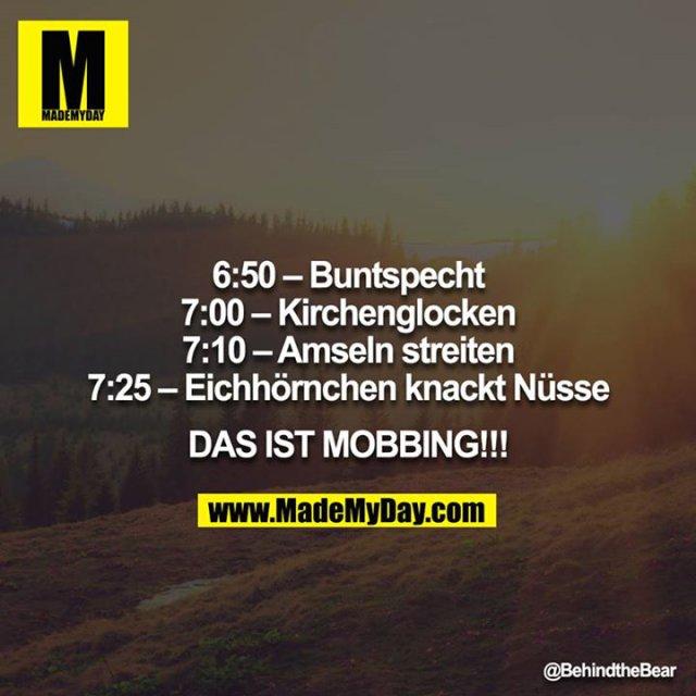 6:50 – Buntspecht<br /> 7:00 – Kirchenglocken<br /> 7:10 – Amseln streiten<br /> 7:25 – Eichhörnchen knackt Nüsse<br /> <br /> DAS IST MOBBING!!!