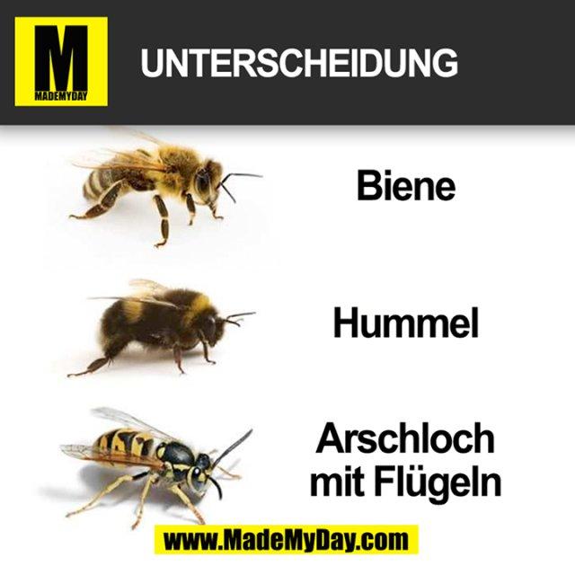 Unterscheidung:<br /> - Biene<br /> - Hummel<br /> - Arschloch mit Flügeln