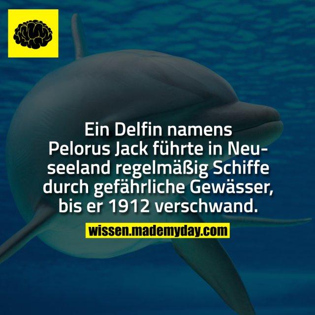 Ein Delfin namens Pelorus Jack führte in Neuseeland regelmäßig Schiffe durch gefährliche Gewässer, bis er 1912 verschwand.