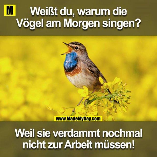 Weißt du, warum die Vögel am Morgen singen?<br /> Weil sie verdammt nochmal nicht zur Arbeit müssen!