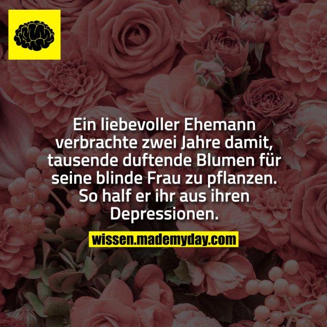 Ein liebevoller Ehemann verbrachte zwei Jahre damit, tausende duftende Blumen für seine blinde Frau zu pflanzen. So half er ihr aus ihren Depressionen.