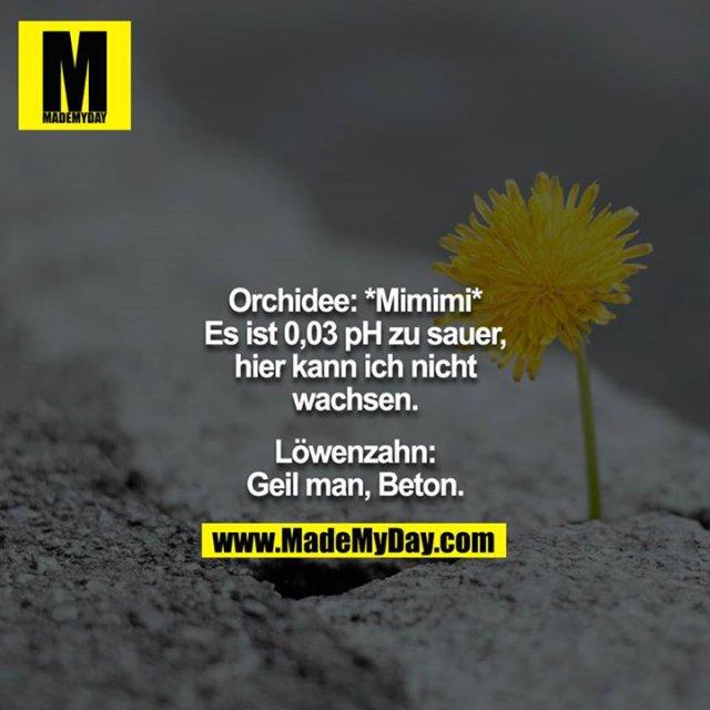 Orchidee: *Mimimi* Es ist 0,03 pH zu sauer, hier kann ich nicht wachsen.<br /> <br /> Löwenzahn: Geil man, Beton.