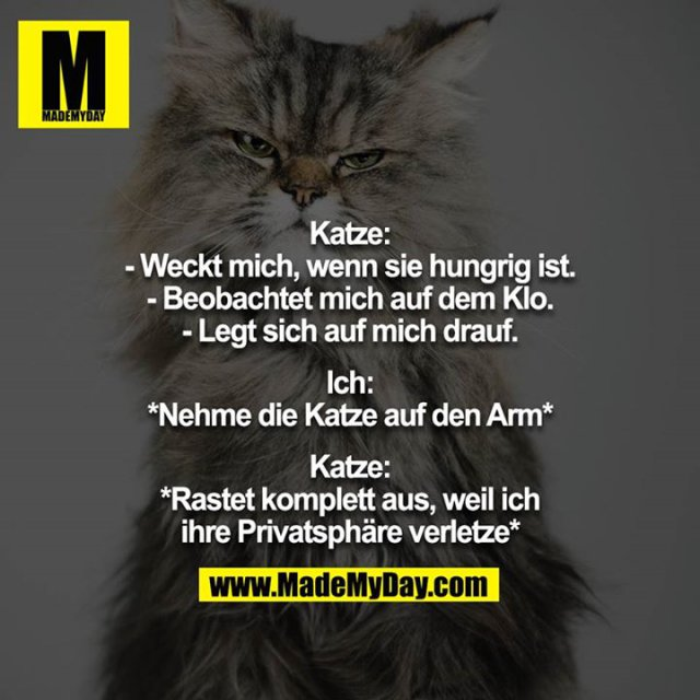 Katze:<br /> - Weckt mich, wenn sie hungrig ist.<br /> - Beobachtet mich auf dem Klo.<br /> - Legt sich auf mich drauf.<br /> <br /> Ich: *Nehme die Katze auf den Arm*<br /> <br /> Katze: *Rastet komplett aus, weil ich ihre Privatsphäre verletze*