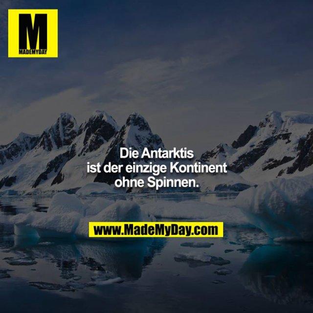 Die Antarktis ist der einzige Kontinent ohne Spinnen.