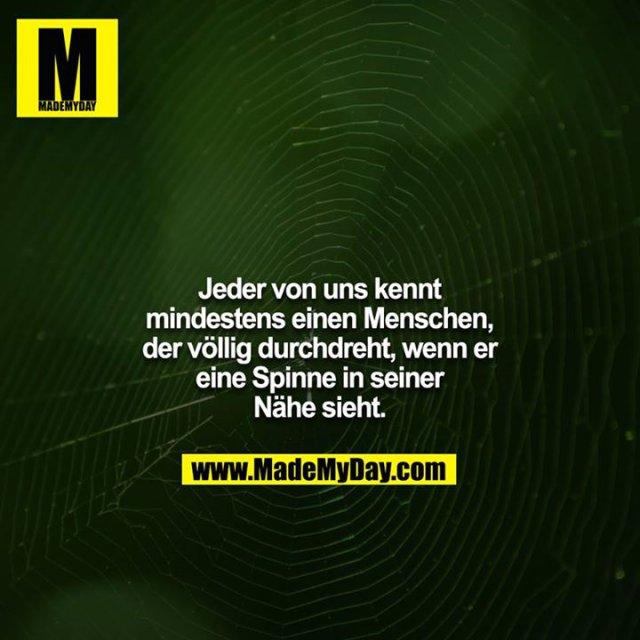 Jeder von uns kennt mindestens einen Menschen, der völlig durchdreht, wenn er eine Spinne in seiner Nähe sieht.