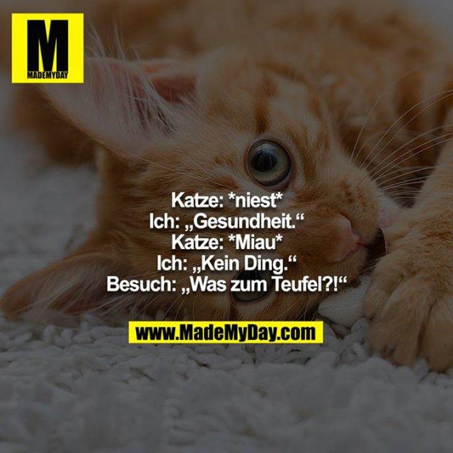 """Katze: *niest*<br /> Ich: """"Gesundheit.""""<br /> Katze: *Miau*<br /> Ich: """"Kein Ding.""""<br /> Besuch: """"Was zum Teufel?!"""""""