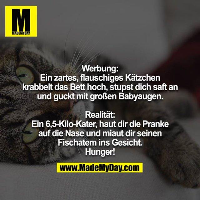 Werbung:<br /> Ein zartes, flauschiges Kätzchen krabbelt das Bett hoch, stupst dich saft an und guckt mit großen Babyaugen.<br /> <br /> Realität:<br /> Ein 6,5-Kilo-Kater, haut dir die Pranke auf die Nase und miaut dir seinen Fischatem ins Gesicht.<br /> Hunger!